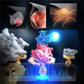 형광현미경을 이용한 실시간 단분자 상호작용 관측 모식도. KAIST 연구진이 쥐의 종양에서 추출한 발암단백질을 마이크로칩에 고정한 뒤 개별 단백질의 특성을 단분자 수준에서 실시간 관측하는데 성공했다.