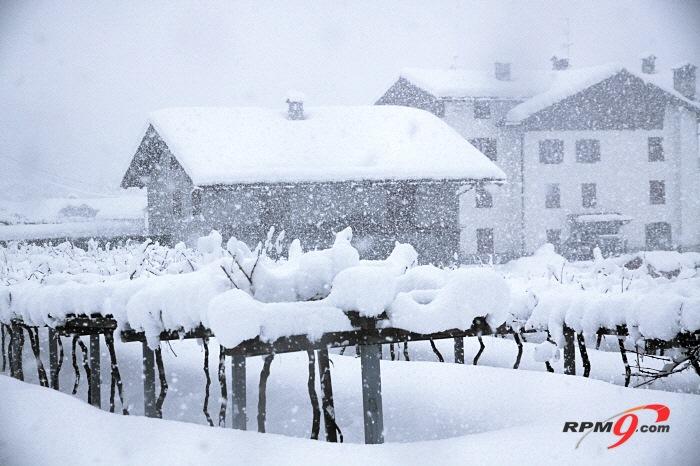 눈 쌓인 포도밭 (사진=박찬규 기자 star@etnews.com)