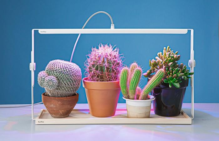 식물을 키워주는 LED 조명 - 전자신문