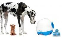 강아지를 위한 '네버엔딩 공놀이 머신'