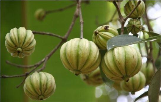 과식 막아주는 식욕억제 '식물' 등장