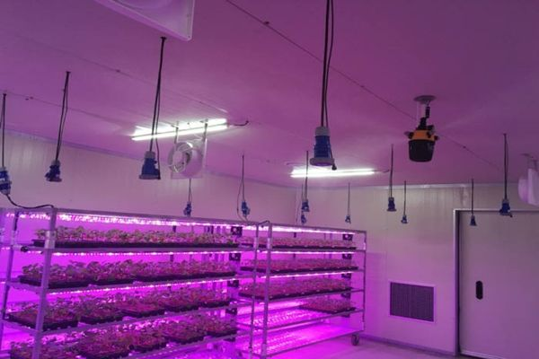 South Korean nursery that is equipped with GAUS's Smart Farm system