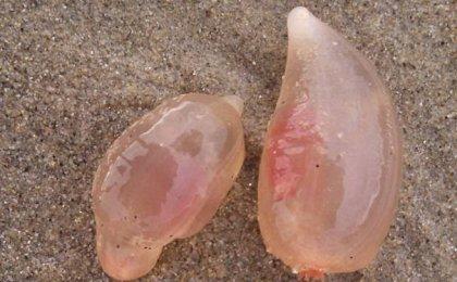 미 남부 해안 뒤덮은 정체 불명 생명체는?
