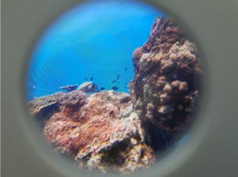 학생들이 카드보드에서 본 화면이다. 양쪽 눈으로 보면 바다속에 있는 듯 하다.