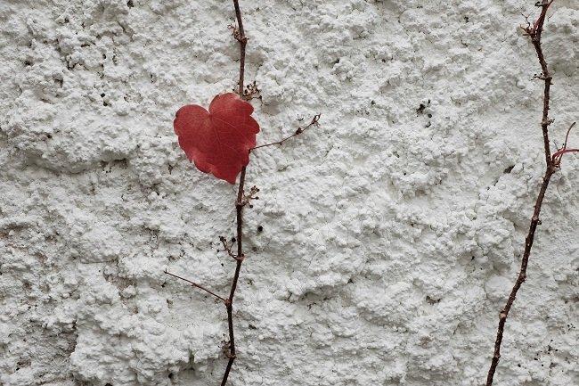 매일 지나는 길에서 만난 사랑의 단풍잎