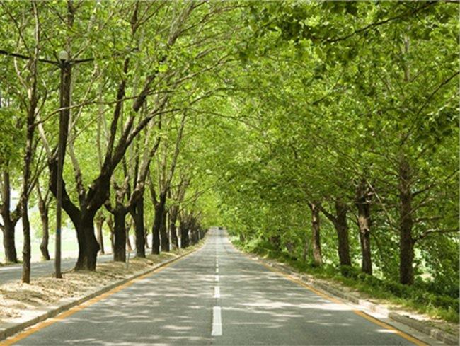 청주시 흥덕구의 폭 22미터 길이 약 6..3km의 가로수길