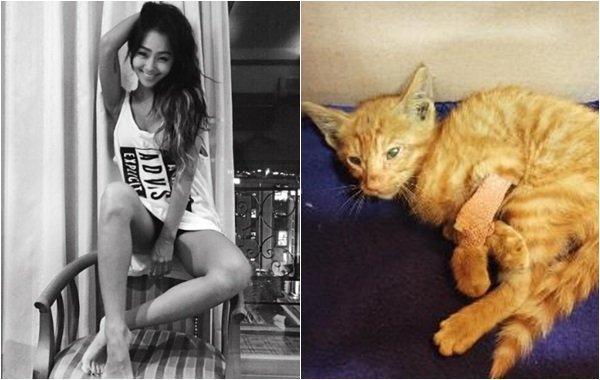 'SXSW 한국 대표 참가' 효린이 구출한 고양이에게 일어난 기적