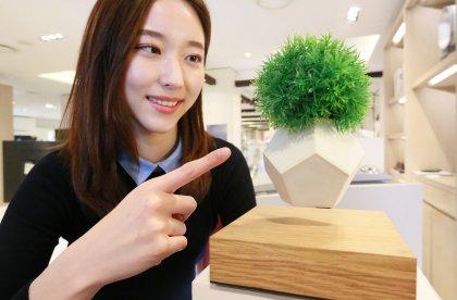 서울 압구정동 갤러리아명품관에서는 '라이프(LYFE)'라는 공중부양 화분을 선보였다. 사진=갤러리아백화점 제공