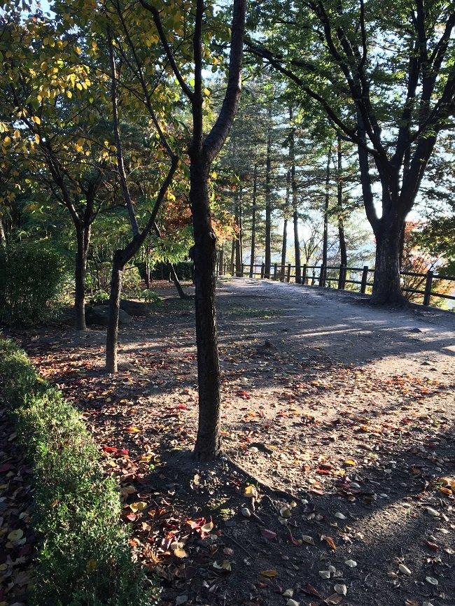 출근길 회사앞 남산 공원을 거닐며, 2016년 11월
