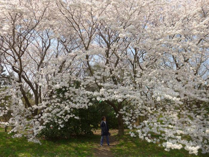 사카타습지공원