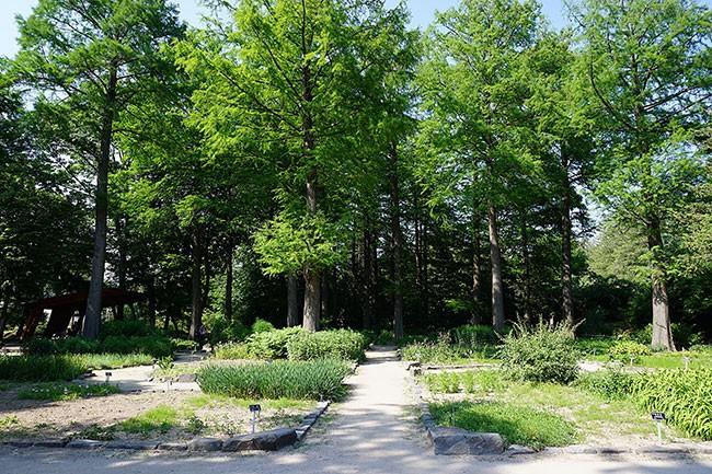 홍릉수목원의 약용식물원