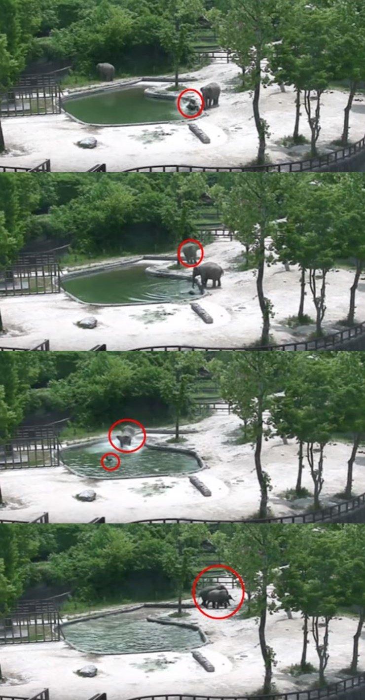 사진=서울대공원 제공 영상 캡쳐