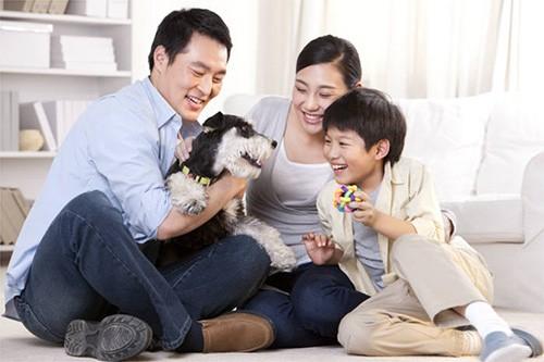 韩国养宠物家庭增加 宠物家电、服务市场快速发展