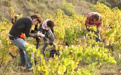 [ET-ENT 영화] EIDF2017(2) '와인의 땅, 프리오라트' 포도가 와인이 되는 과정 동안 느끼는 가족 같은 감정