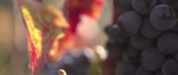 '와인의 땅, 프리오라트' 스틸사진. 사진=EBS국제다큐영화제 제공