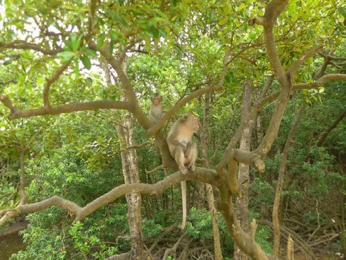 원숭이섬의 원숭이들