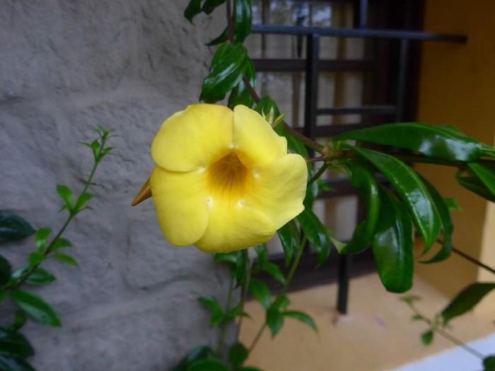 담벼락에 만개한 꽃