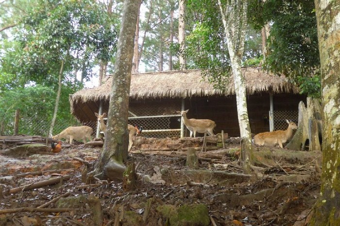 사슴 농장