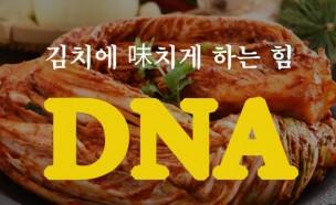 김치 맛의 비밀