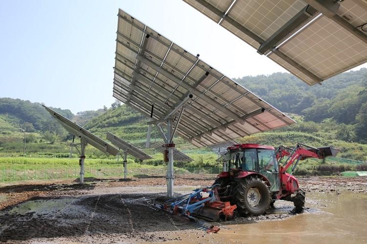 전남 순천에 시범설치된 파루 태양광 이모작 트래커(자료제공 = 파루)
