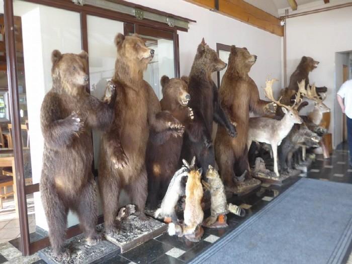 호텔휴게소 동물박제들