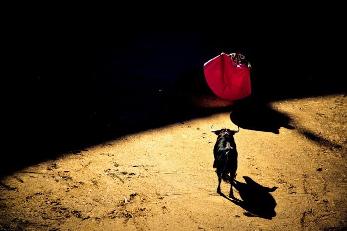 안식처인 쿼렌시아에서 빠른 휴식을 취한 소는 더 강해진다. 출처:Pintrerest