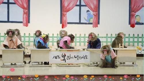 전북부안 원숭이학교, 설명절연휴 갈만한곳으로 떠올라