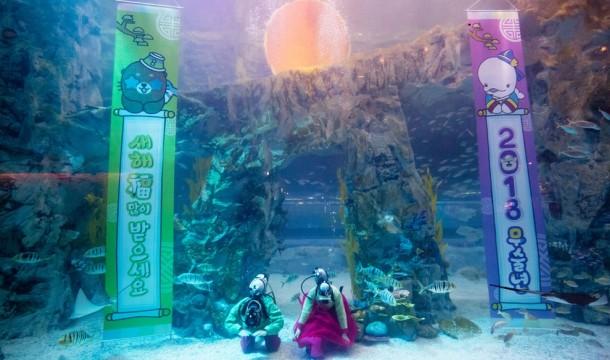 롯데월드타워 아쿠아리움에서 아쿠아리스트들이 새해를 맞아 수중인사를 하고 있다. 사진=롯데물산 제공