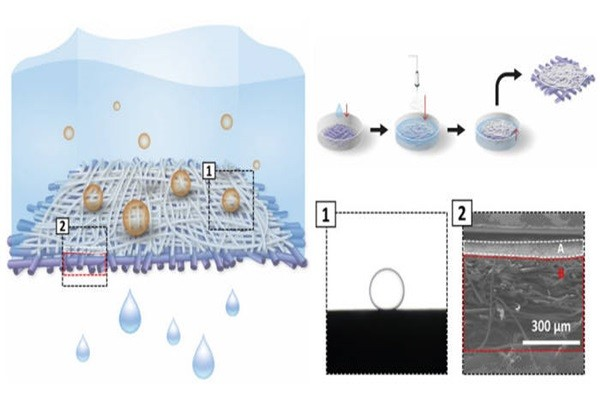 Underwater superoleophobic separation membrane.  Concept diagram of separation of water and oil from NFC membrane (left).  Manufacturing process of NFC membrane (top left)