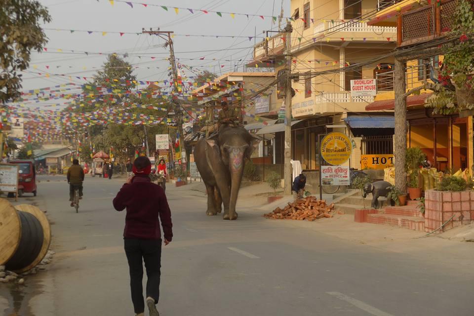 거리의 코끼리
