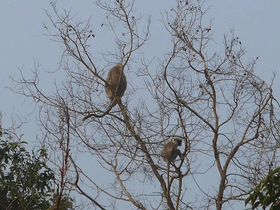 나무 위 원숭이들