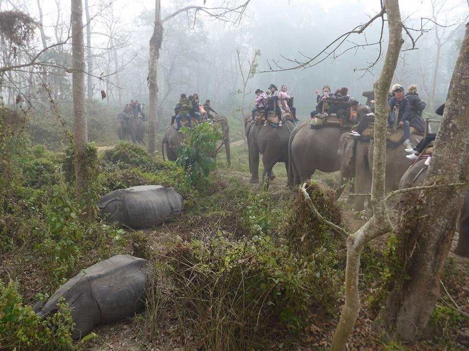[허여사의 여행일기 히말라야편 Day-24] 치트완 국립공원(3)