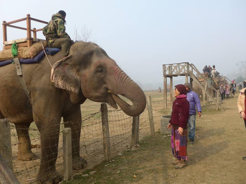 바나나를 먹는 코끼리
