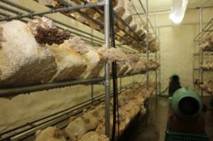 소양강영농조합법인, 귀농자 대상 '버섯재배 수익창출' 지원