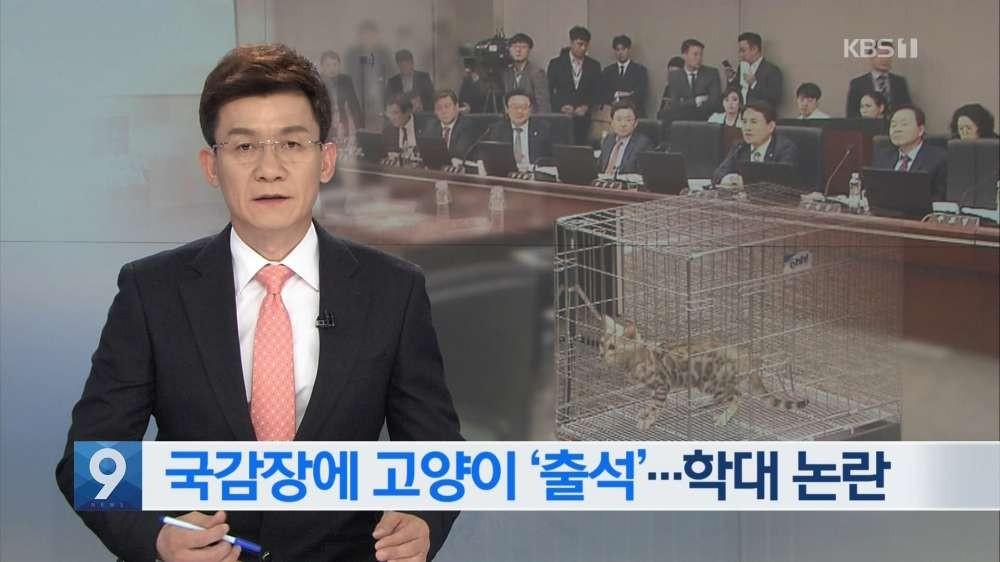 """'국감 스타' 노린 의원들, 보여주기식 질의 쏟아져 """"역풍"""""""