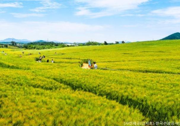 국내기차여행전문 홍익여행사 추천...봄의 정취를 느낄 수 있는 전북 고창 청보리밭축제