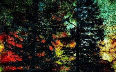 '숲의 안부를 묻는다' 이아린 사진전, 9일부터 21일까지 비움 갤러리에서 열려