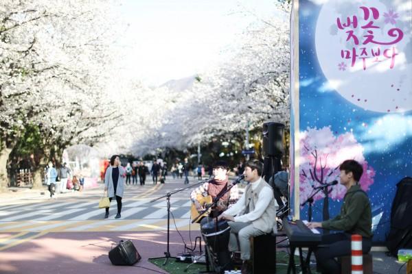 야간벚꽃축제