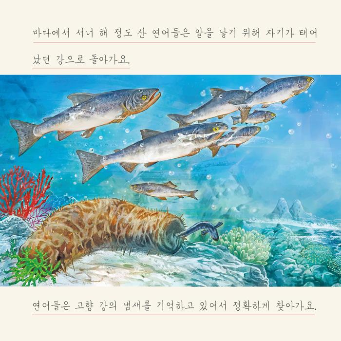 [카드뉴스] 연어