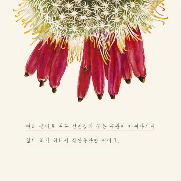 [카드뉴스] 선인장