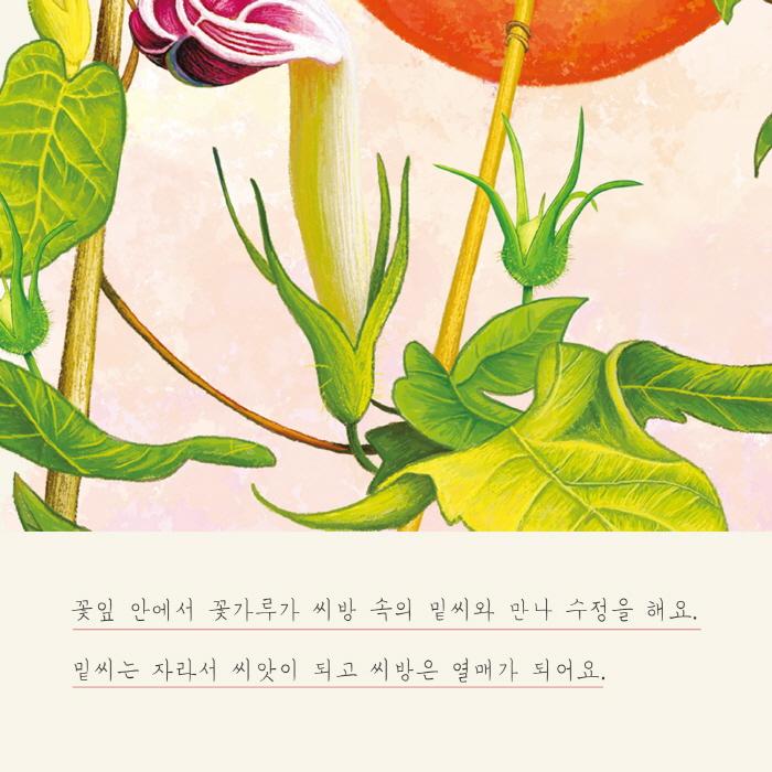 [카드뉴스] 나팔꽃