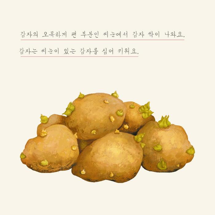 [카드뉴스] 감자