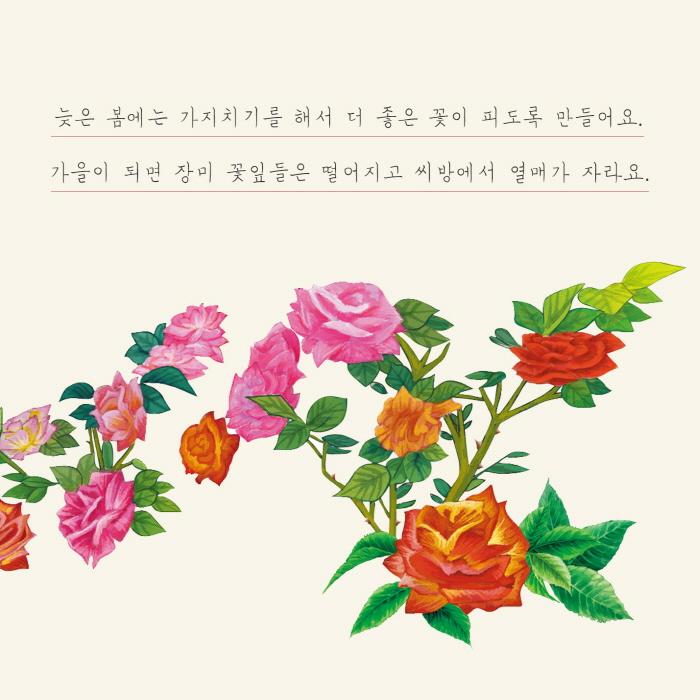 [카드뉴스] 장미