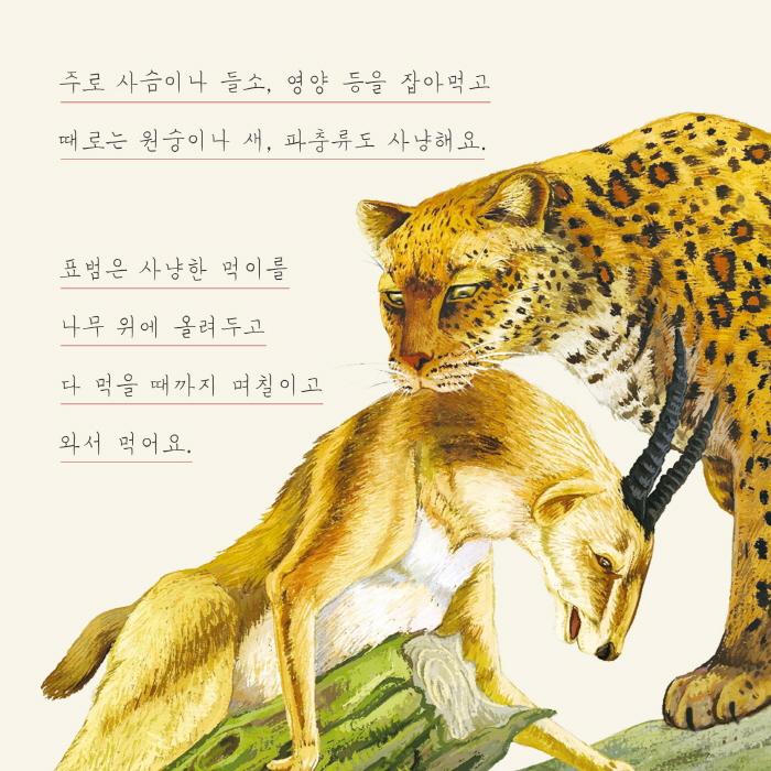 [카드뉴스] 표범
