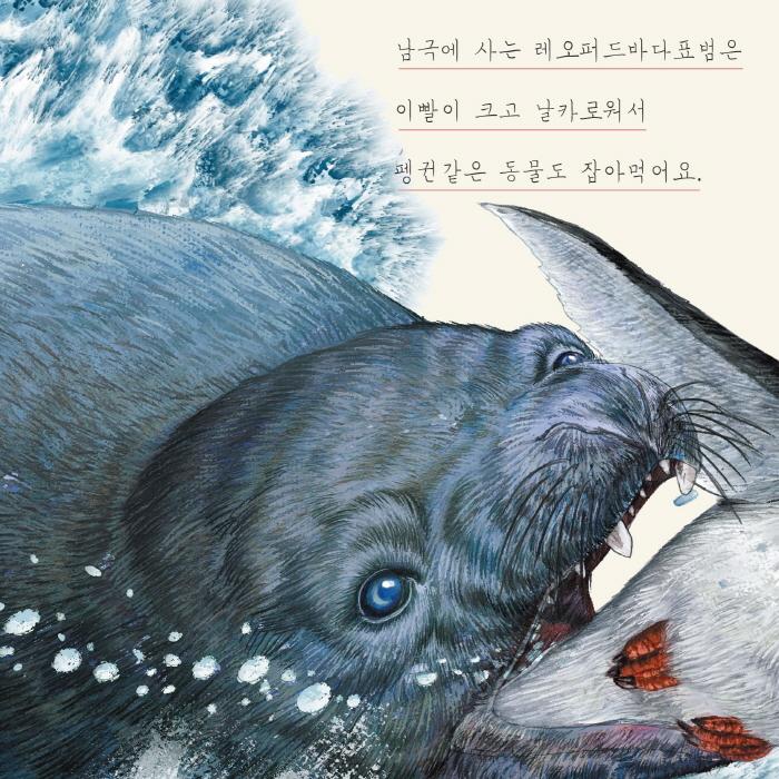 [카드뉴스] 물개와 바다표범