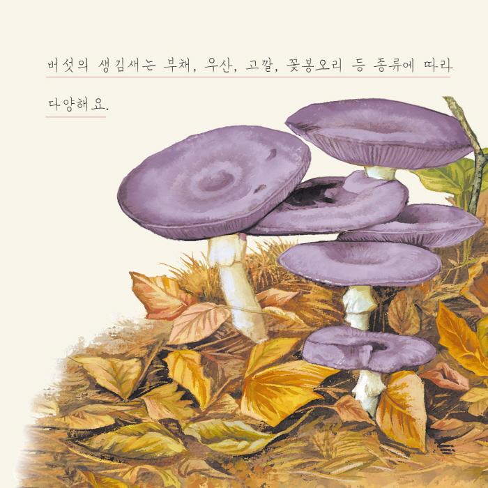 [카드뉴스] 버섯