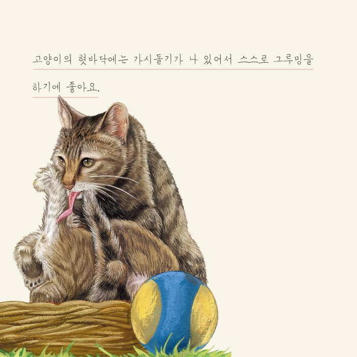 [카드뉴스] 고양이