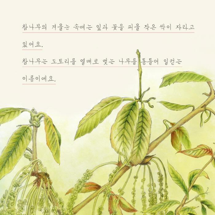 [카드뉴스] 도토리