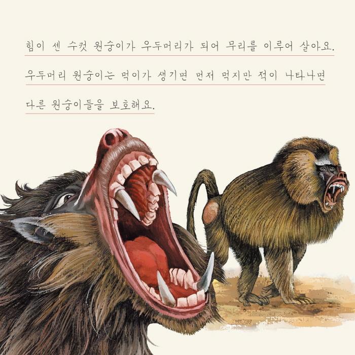 [카드뉴스] 원숭이