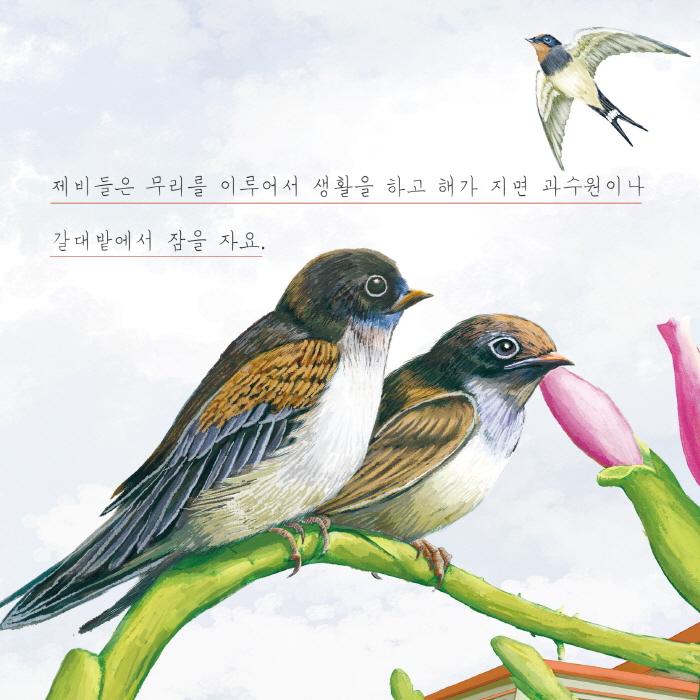 [카드뉴스] 제비